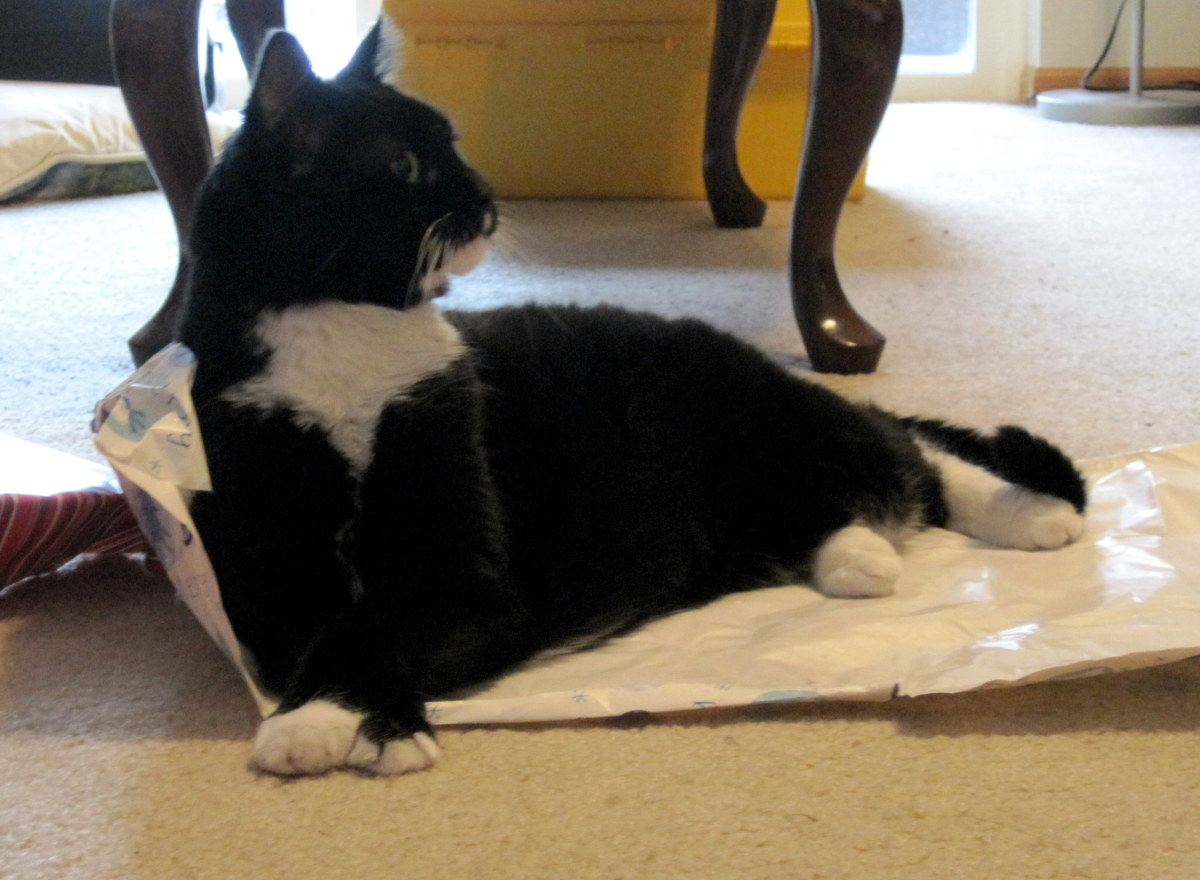 Angel's favorite part of any special occasion is the wrapping and boxes.