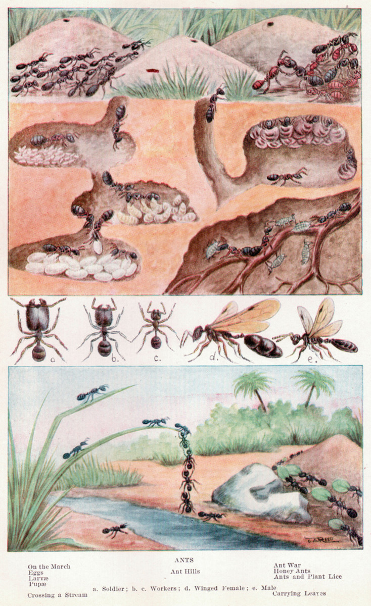 All about Ants Illustration
