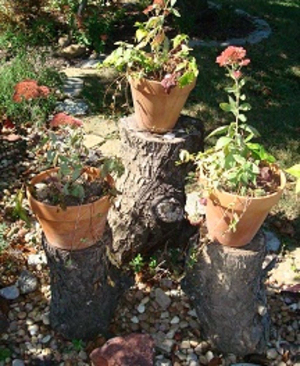 Combine 3 tree stumps together, add planters and have an interesting addition to your landscape
