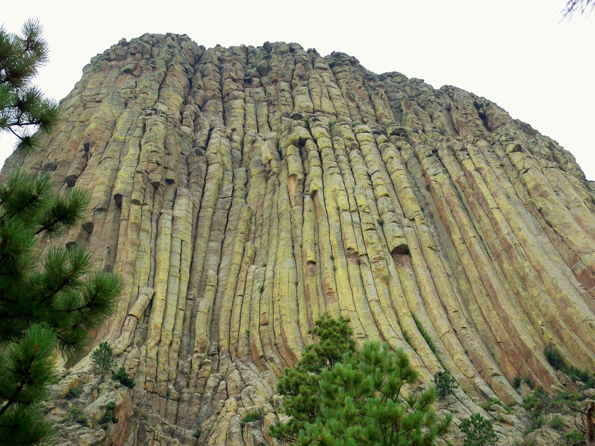 Close up view of hardened lava columns that form Devils Tower