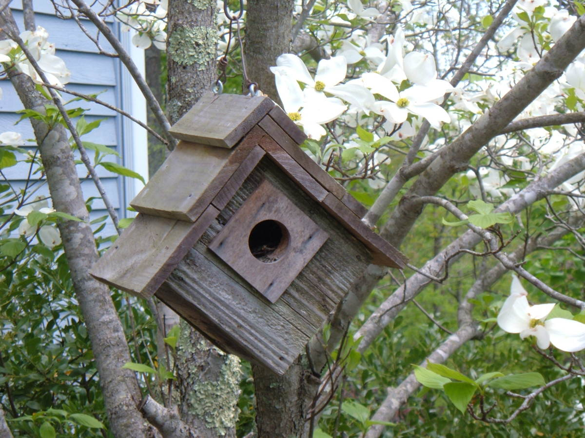 Rustic Birdhouse: Ready for Occupancy!