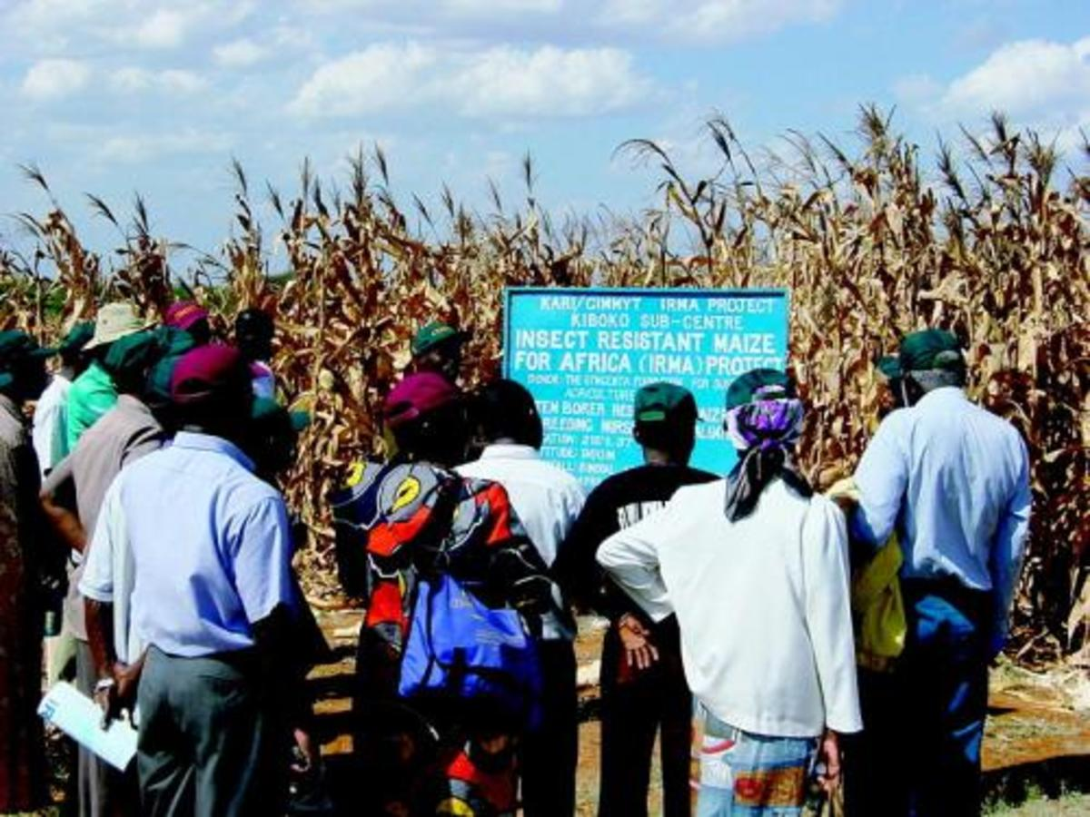 """Corn is the main staple in South Africa and this failure is destroying many lives. Monsanto's genetically manipulated corn(maize) failed to produce hardly any seeds- Monsanto says that this was caused by """"underfertilization processes in the Lab""""!!"""