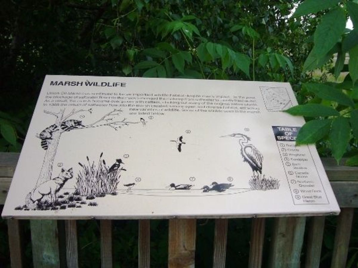 A sign about the wildlife commonly seen in the marsh