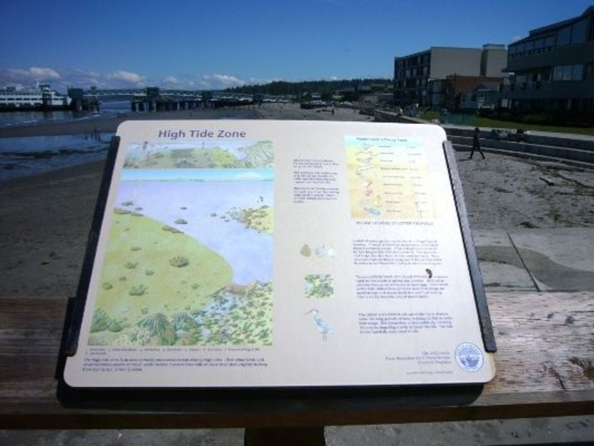 One of many interpretive signs about the beach and the ecosystem of Puget Sound.