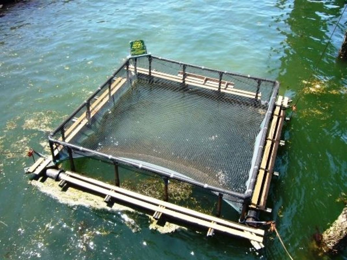 This is the salmon imprinting pen located near the fishing pier ensuring that coho salmon reared in the nearby hatchery will return to this area.