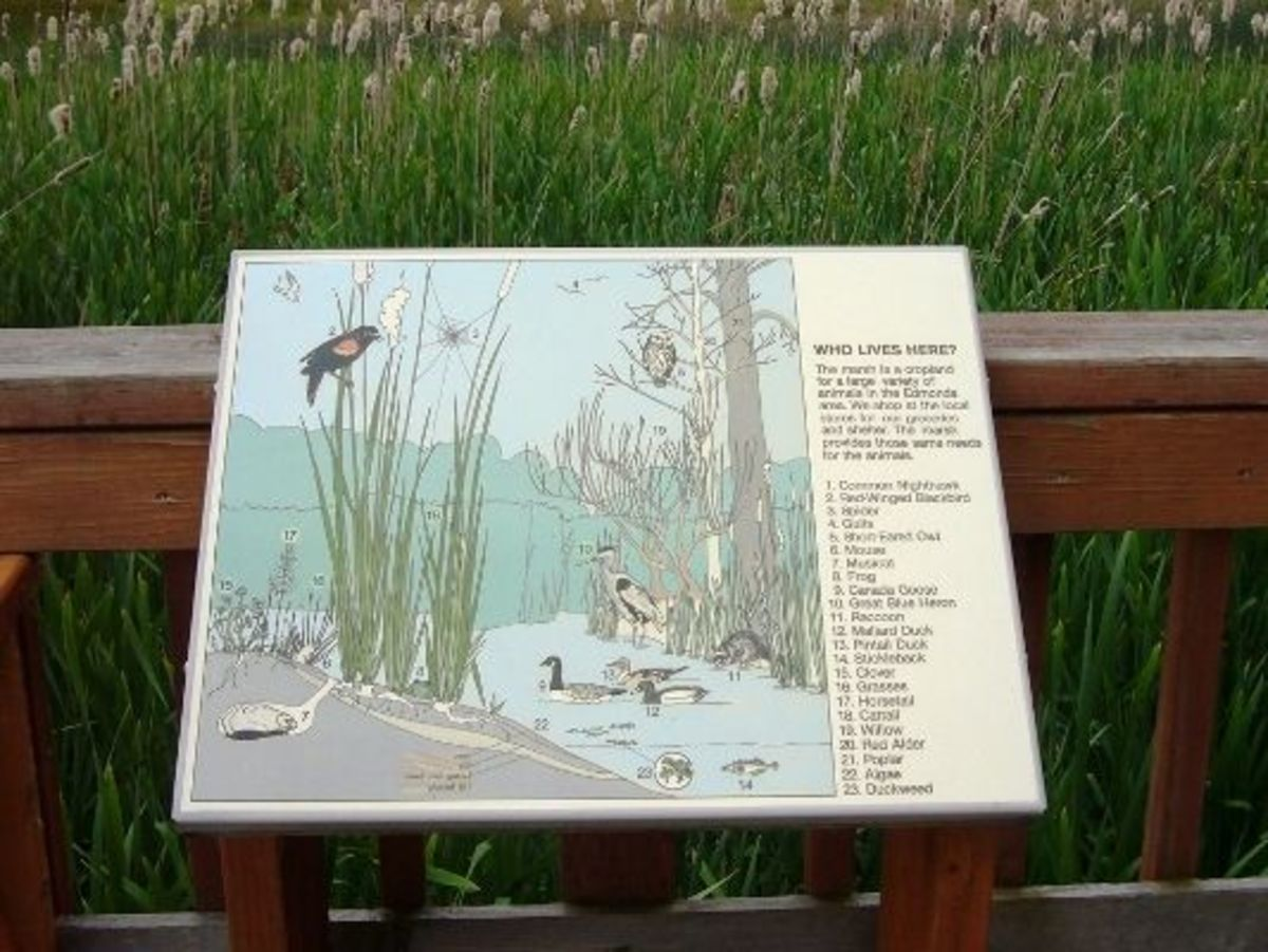 A sign identifying some of the birds seen around Edmonds Marsh