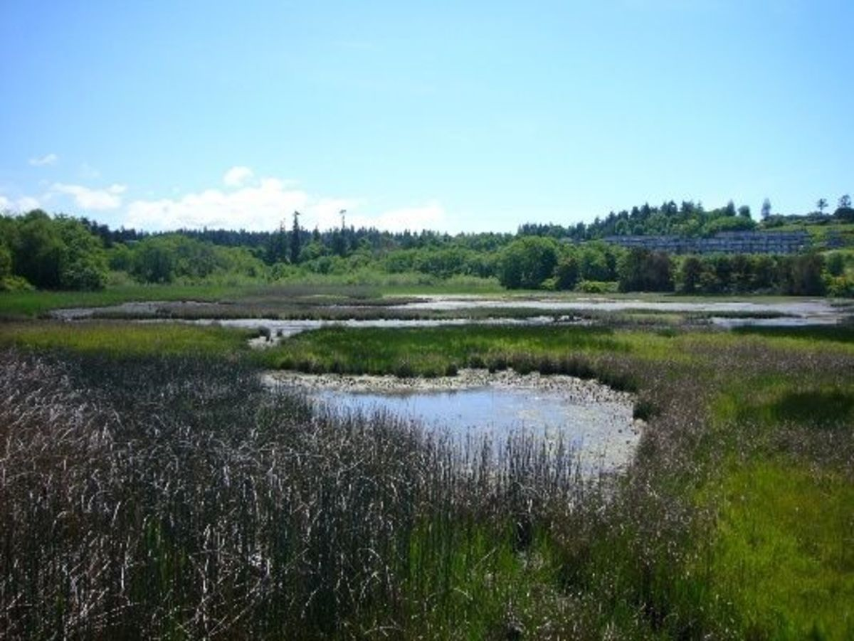 The Edmonds Marsh at low tide