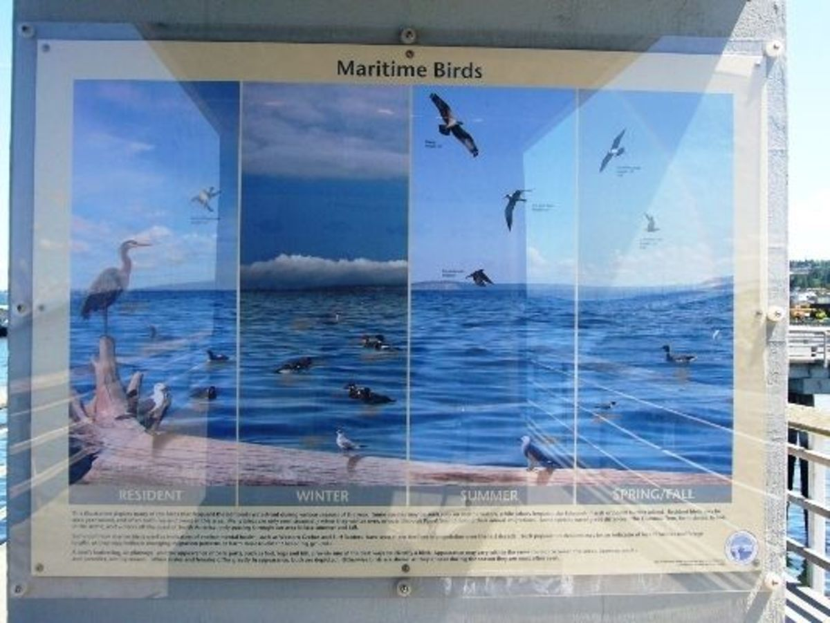 A sign to help identify the birds seen around the fishing pier
