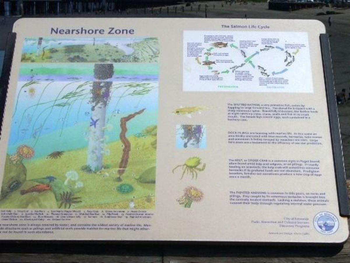 Another colorful interpretive sign with information about the beach ecosystem