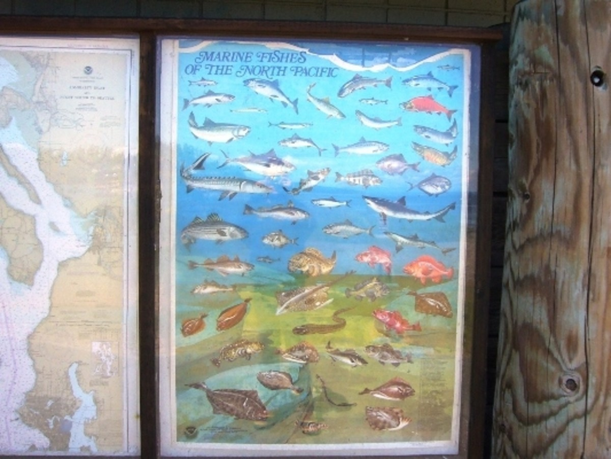 A sign to help identify some of the fish that may be seen in the underwater park
