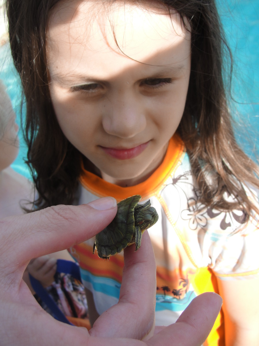 Inspecting a turtle, which is a coldblooded vertebrate