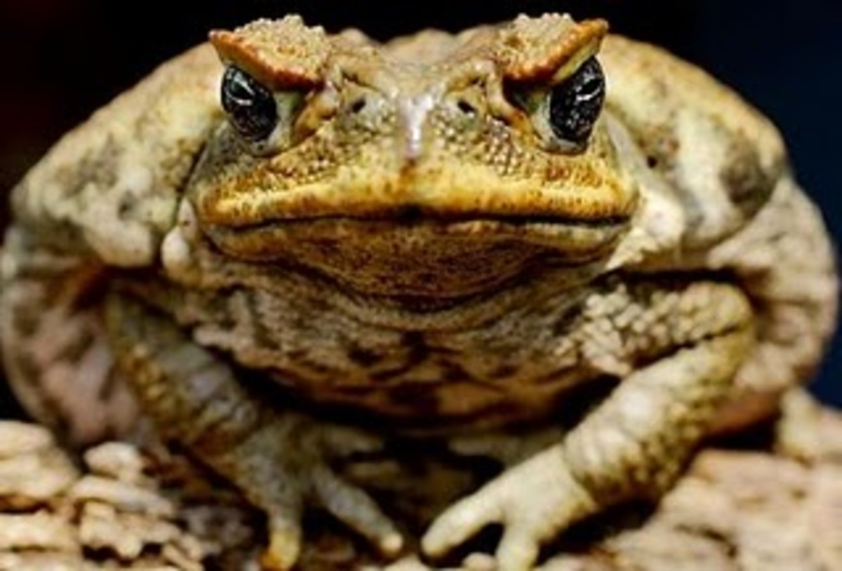 Analysis of Death of a Toad by Richard Wilbur