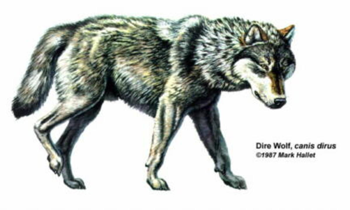 DIRE WOLF Drawing by Mark Hallett