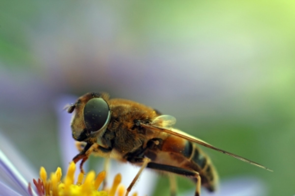 Bees exhibit some fixed-action behaviors, such as showing the hive where food they have found is located.