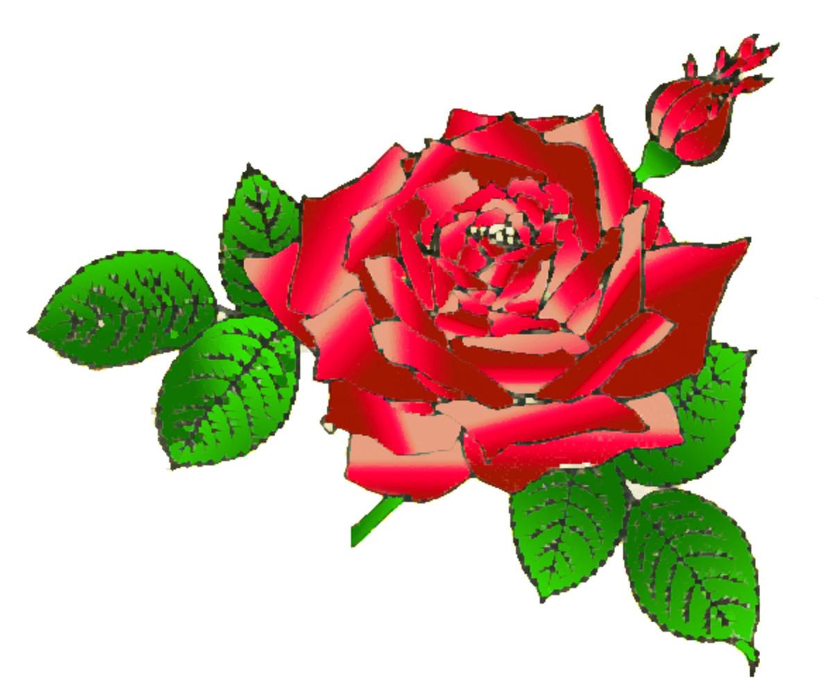 rose-flowers-vintage-rose-image-collection