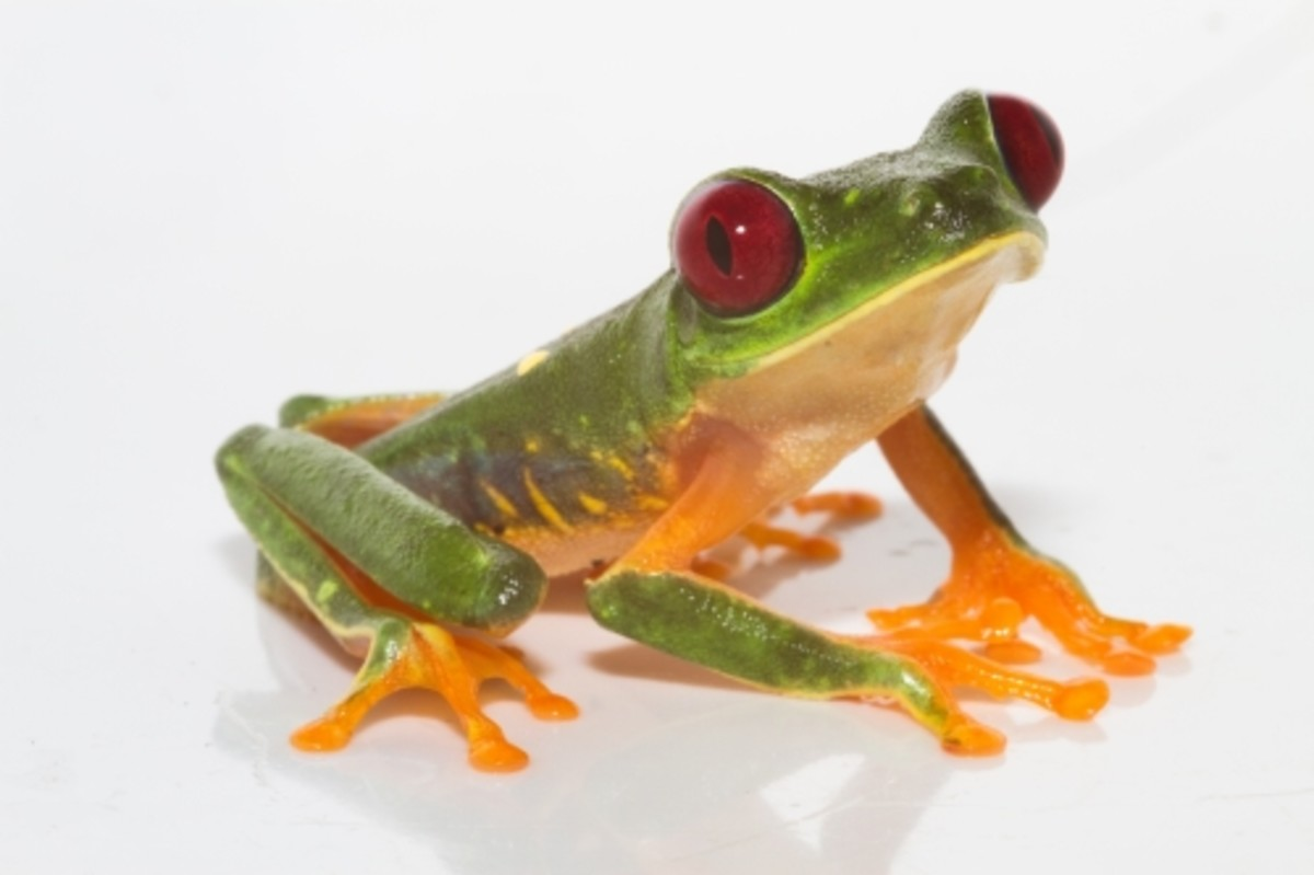 The Hyla Vacuum was named after this little tree frog!  Whether he's cute or creepy, I'm not sure!