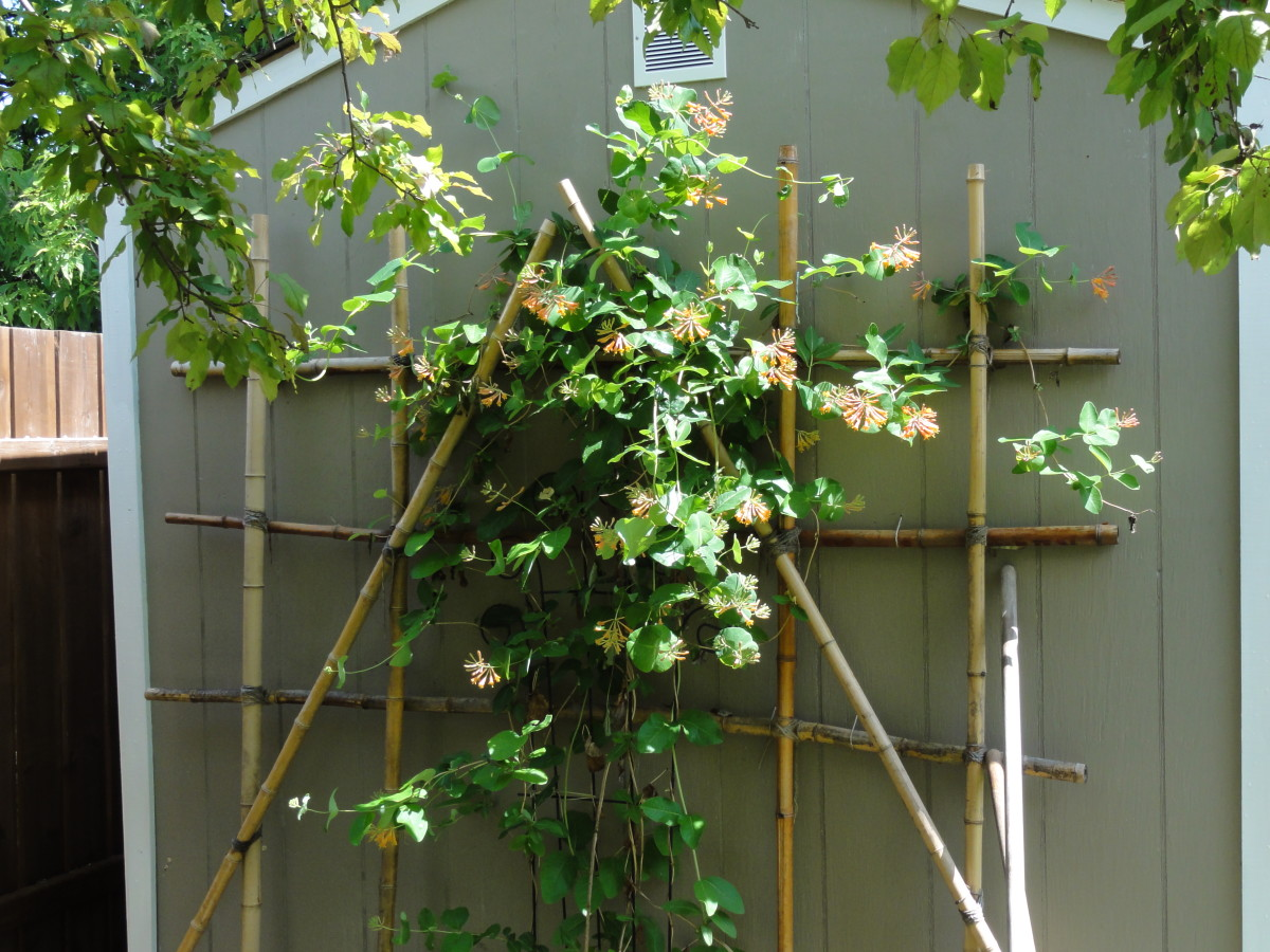 How To Build A Bamboo Trellis For Your Garden and Make Your Garden Beautiful