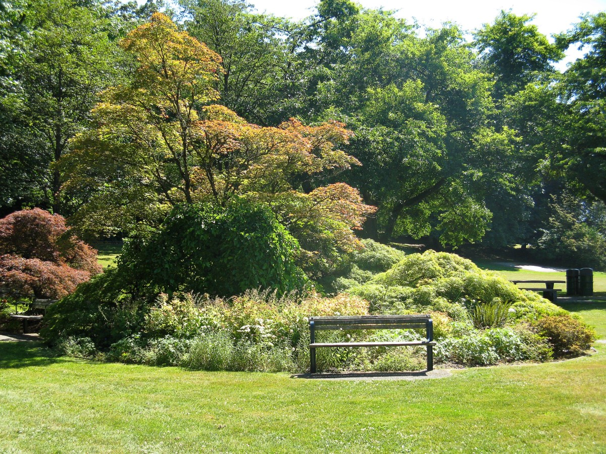 Shrubs and trees in the park
