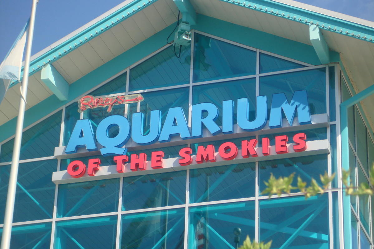Favorite Indoor Attractions in the Pigeon Forge Area