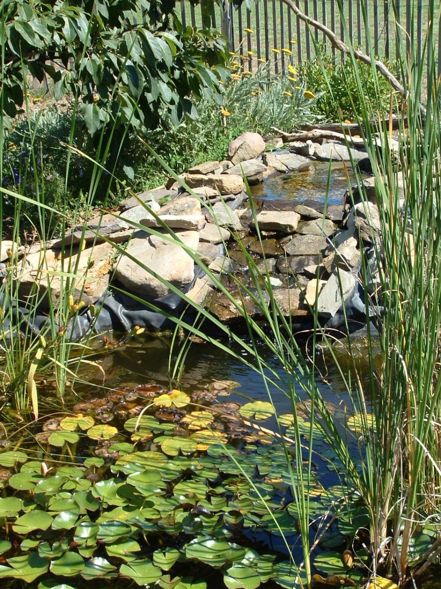 Small Pond at Start of Seaside Nature Trail
