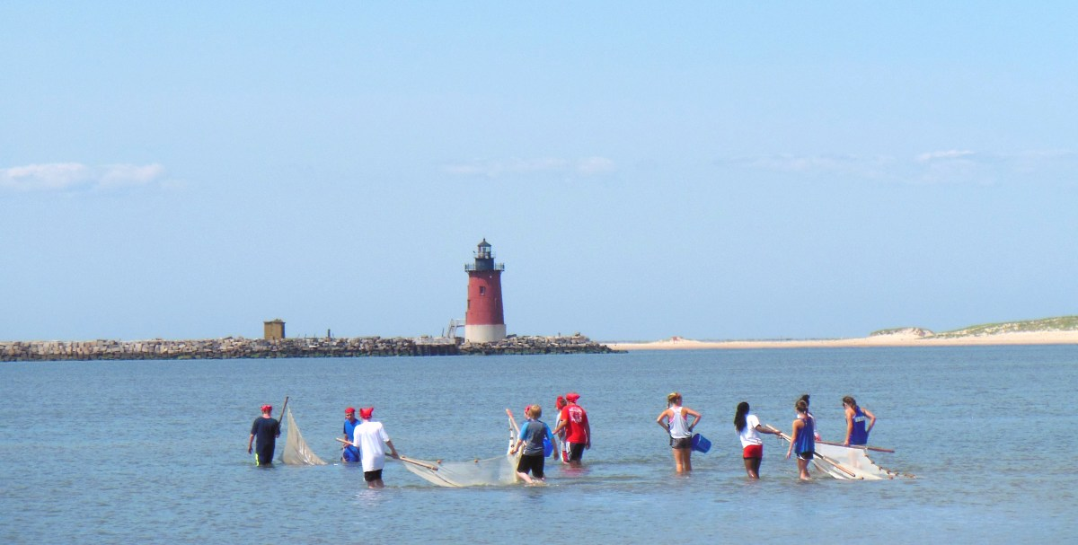 Students with nets wade into the Delaware Bay at low tide looking for marine animals.