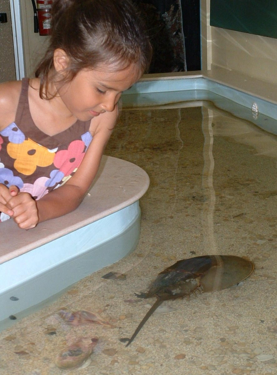 Kids love the touch tank.