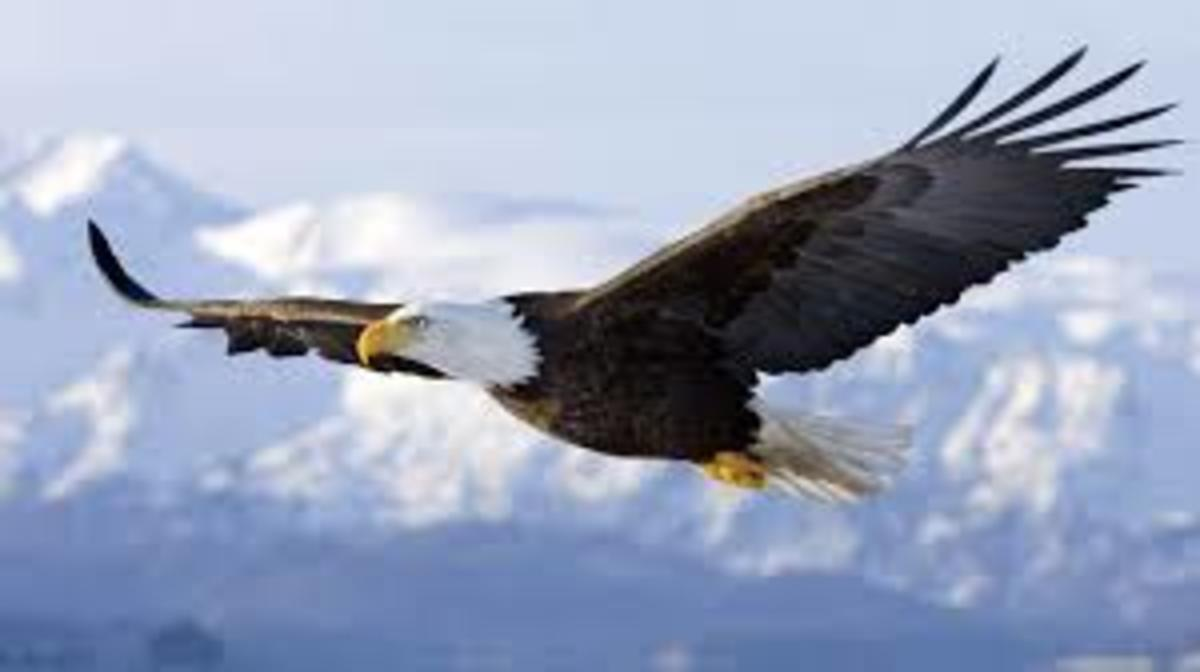 The eagle commands the altitudes, sees far, and is ruler of his domain.
