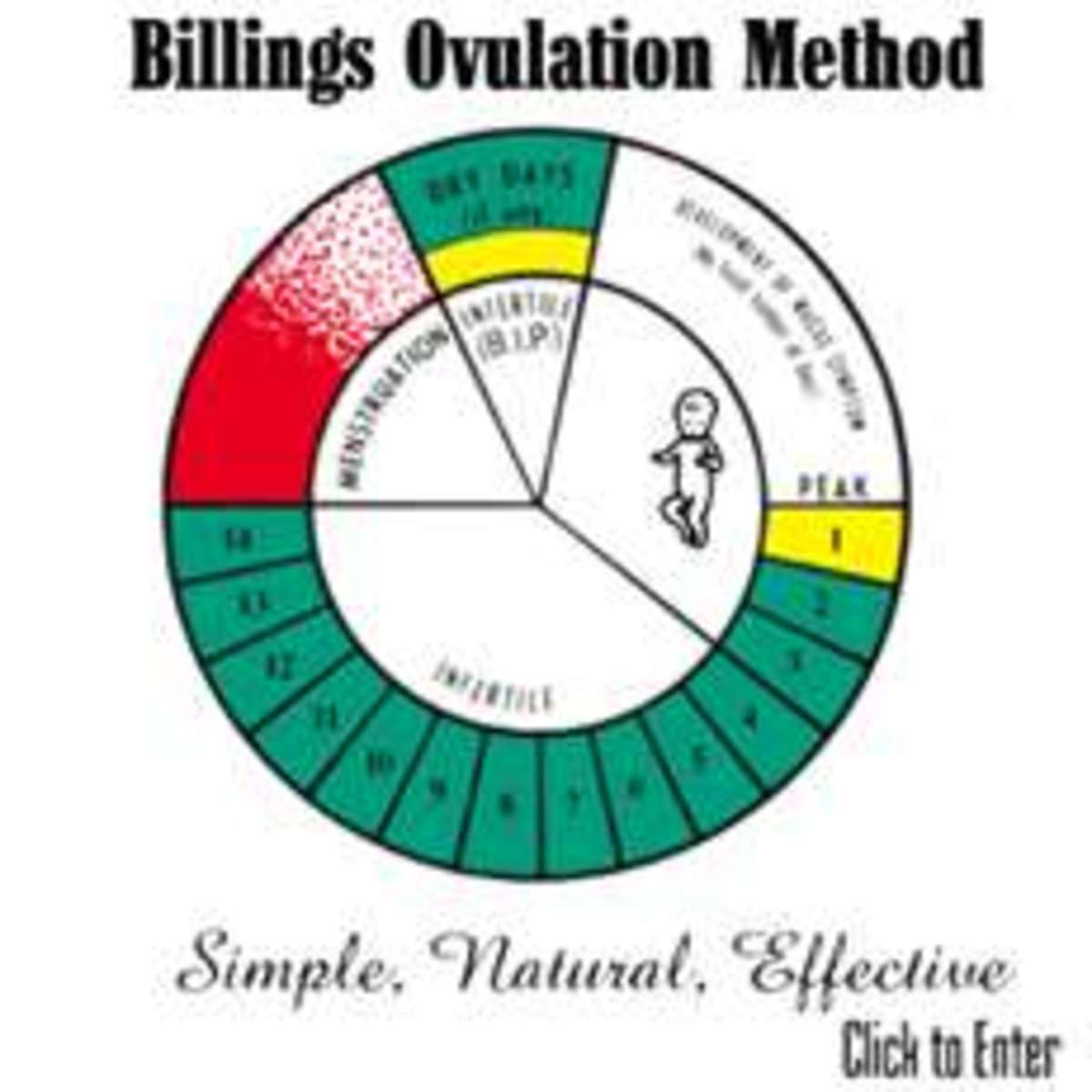 Natural Family Planning: Ovulation Methodof NFP