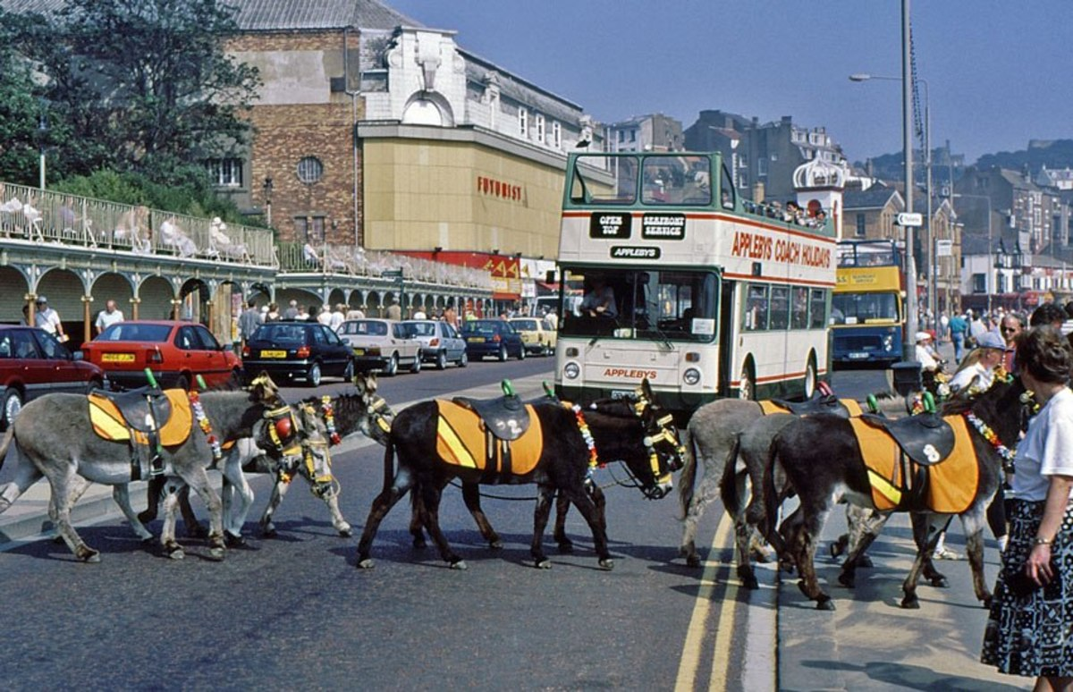 Donkeys at Scarborough - it's what the kids come for (and some adults), picture by Tony Wilson