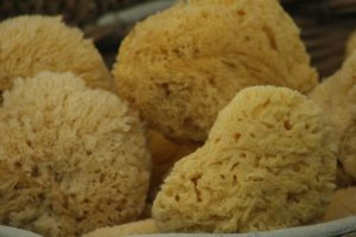 Natural sea sponges were once-living creatures of the oceans.