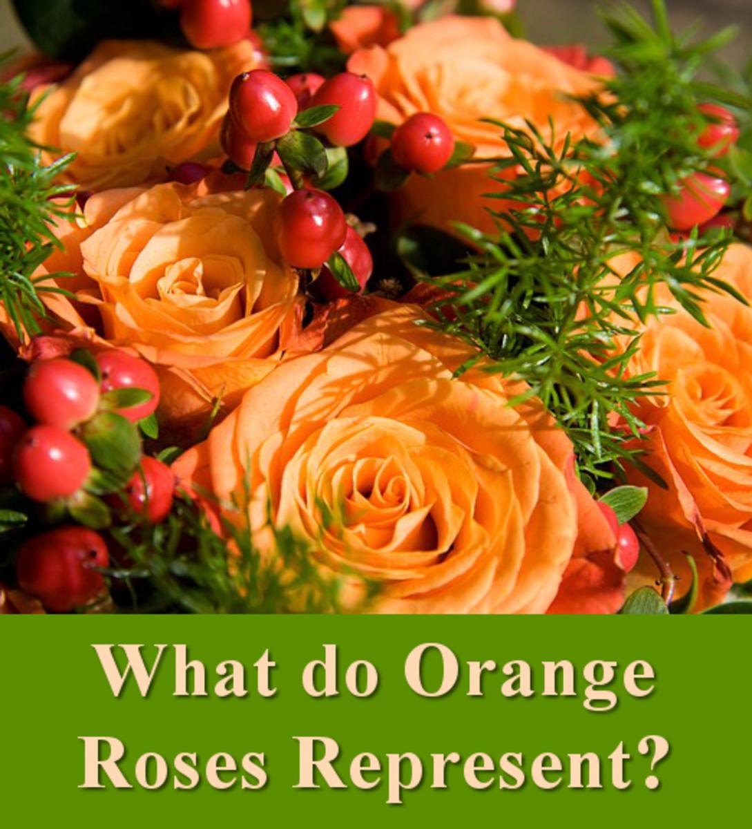 What do orange roses represent?