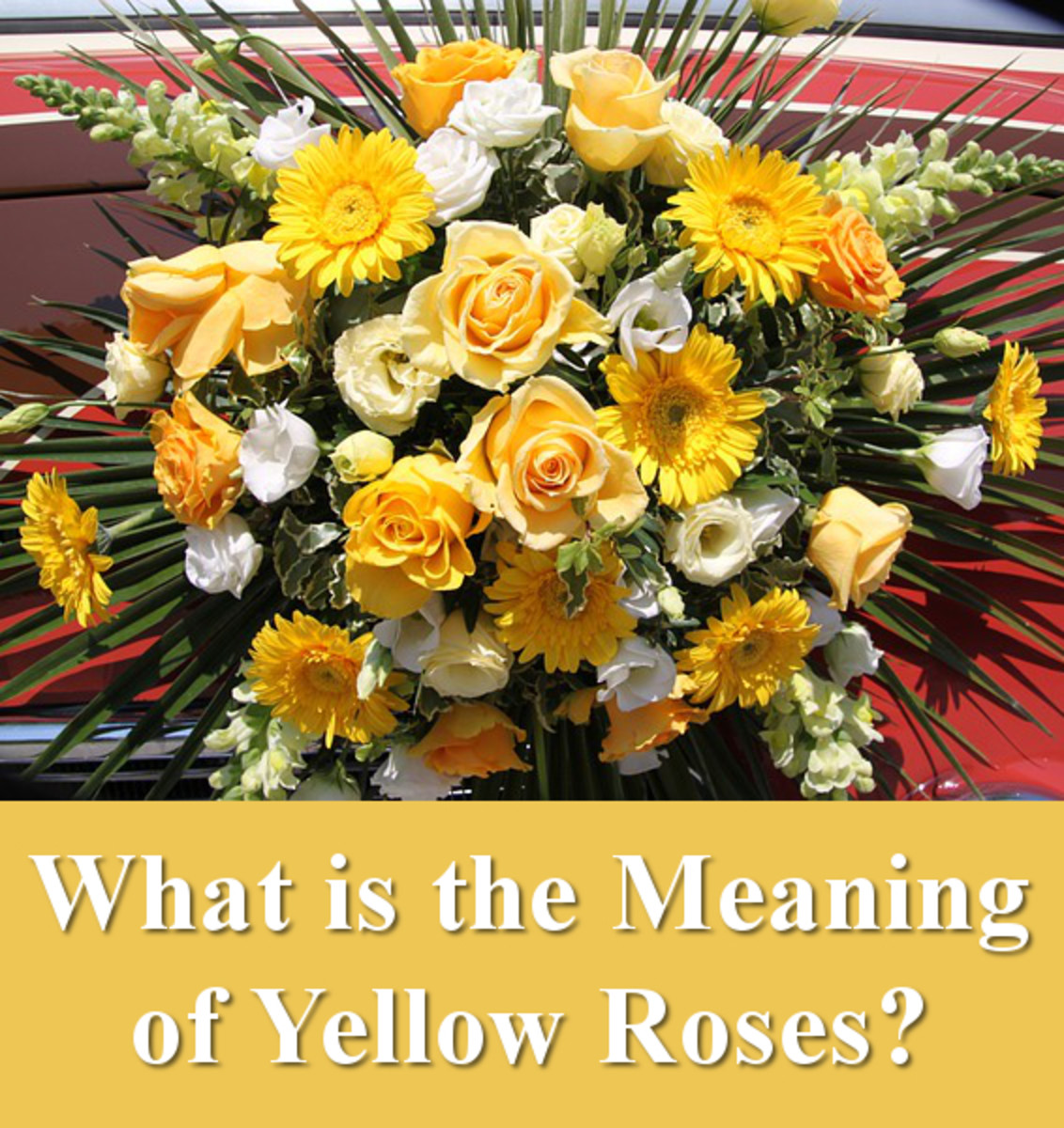 What is the meaning of yellow roses?