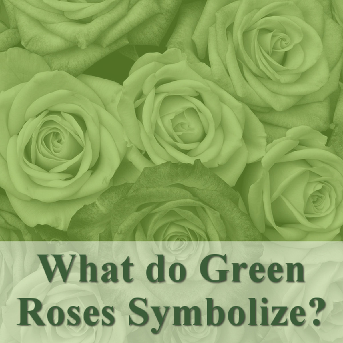 What do green roses symbolize?
