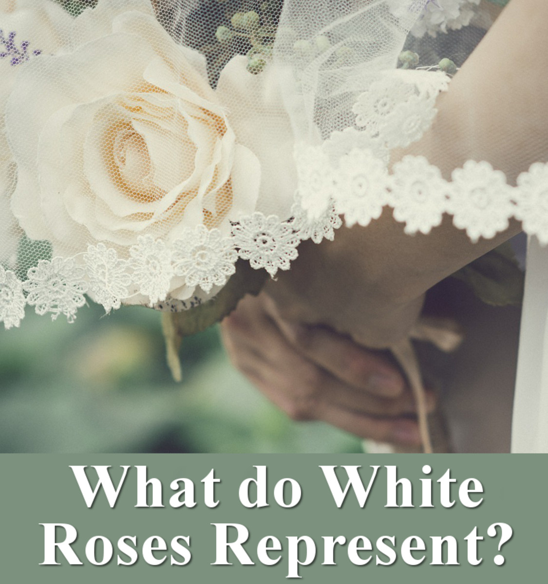 What do white roses represent?