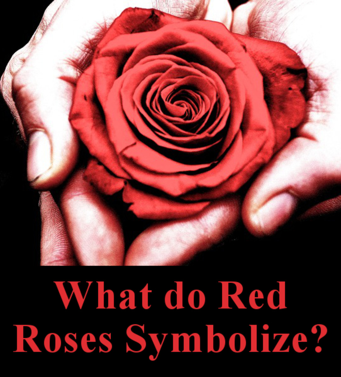 What do red roses symbolize?