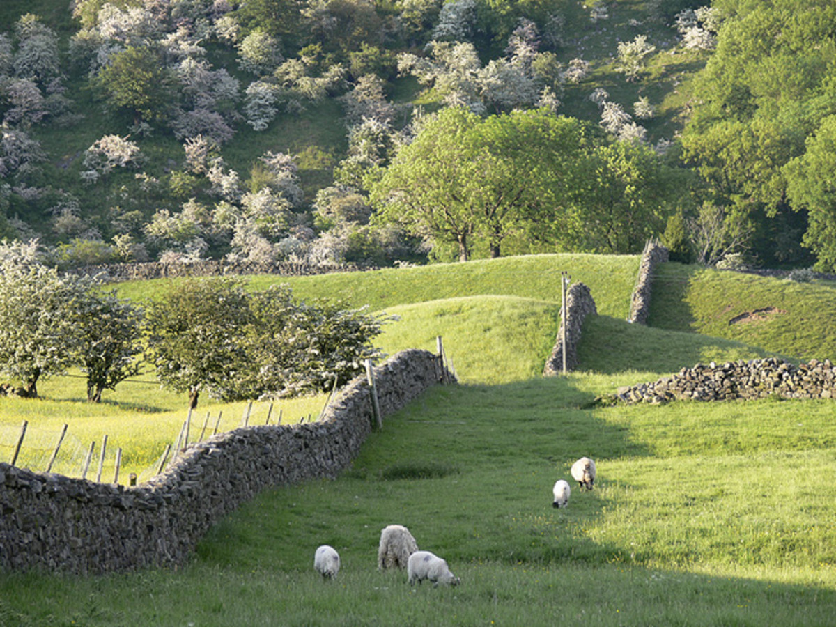 Sheep and walls in Arkengarthdale - two things not in short supply in the dales (well in Yorkshire as a whole, people are outnumbered 3 to 1 at least by sheep). Stone walls come in handy to fall off if you're daft enough to try climbing them.