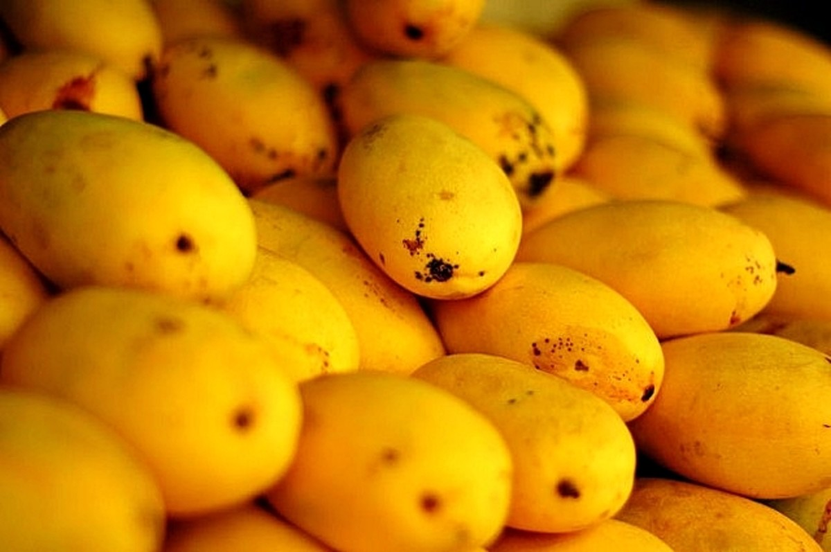 Mangoes from the Philippines