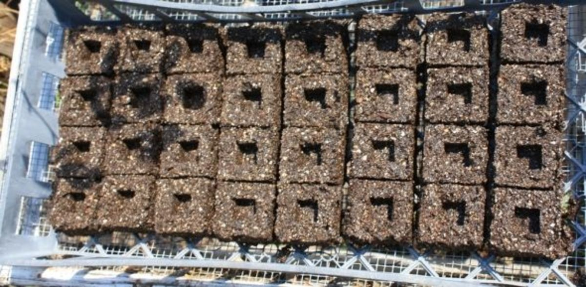 tray of soil blocks ready for planting
