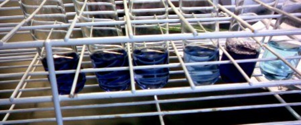 Serial dilution performed on blue dye solution. Notice the color gradually getting paler as dilution advances.