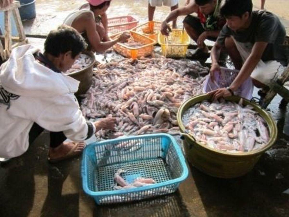 Fish Port in Concepcion Iloilo