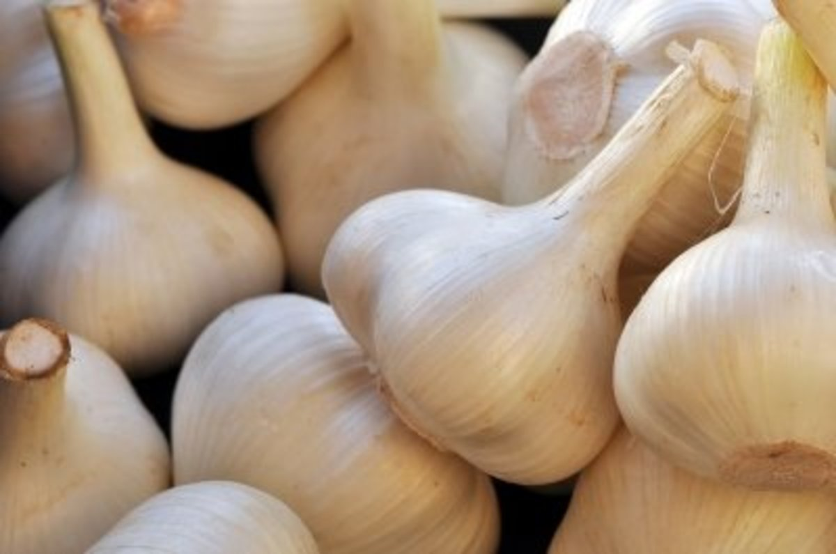 Health Benefits of Eating Garlic on an Empty Stomach