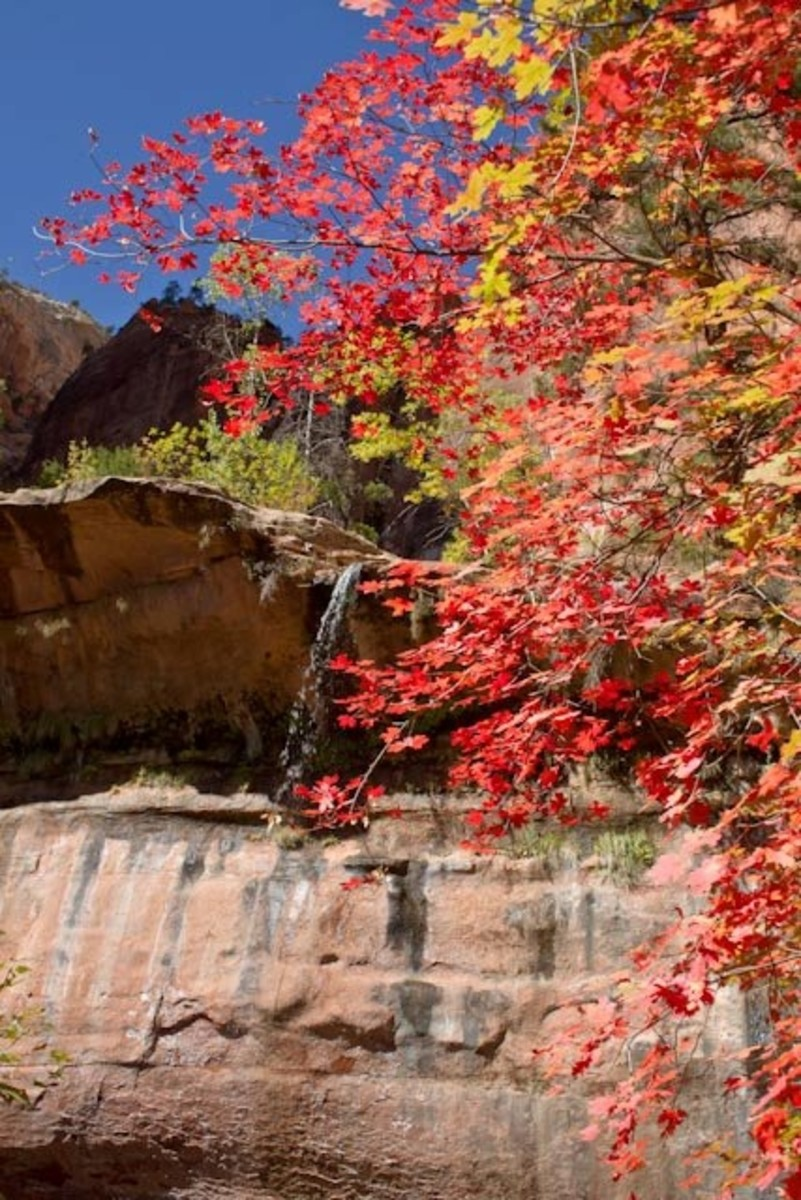 Near Lower Emerald Pool, Zion NP by Charles Bame
