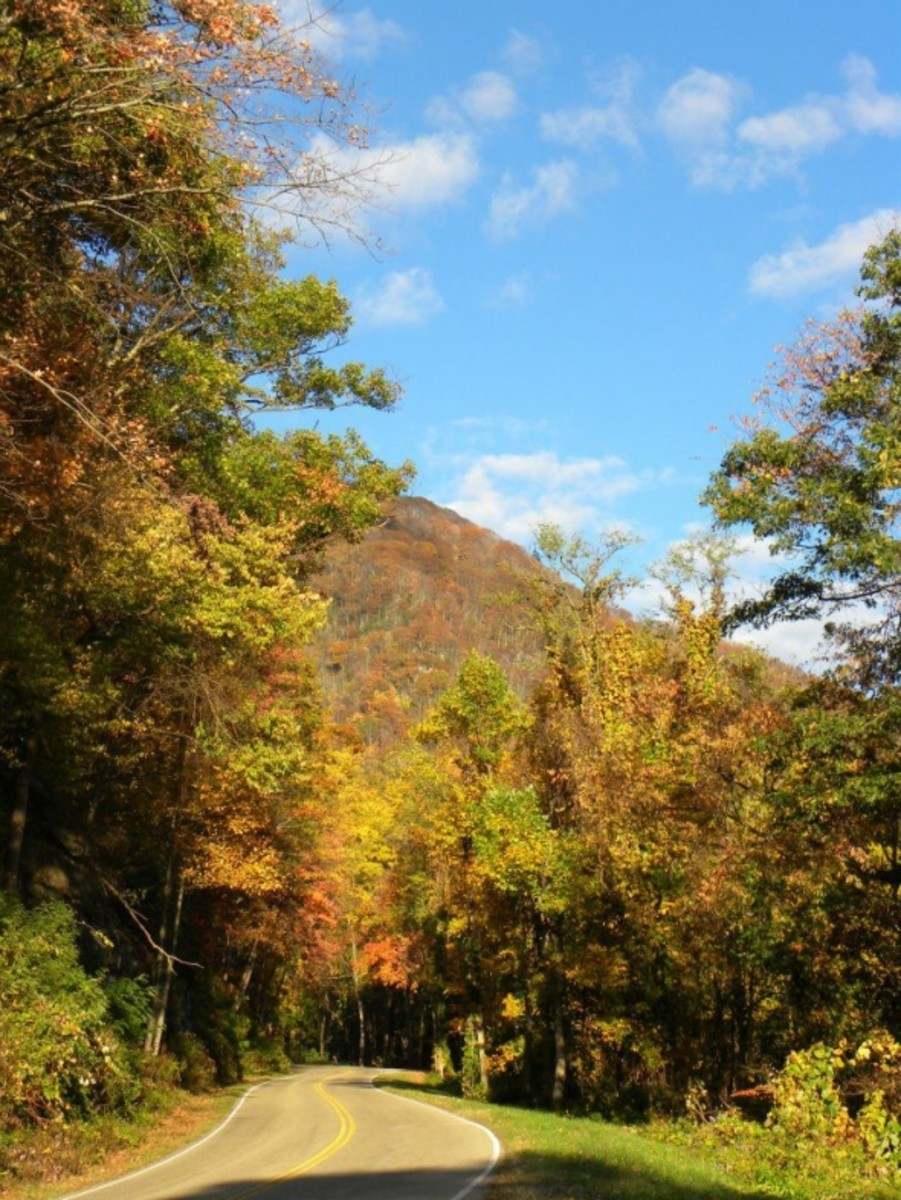 Great Smoky Mountains National Park on October 21, 2011. by Dawn Alicia