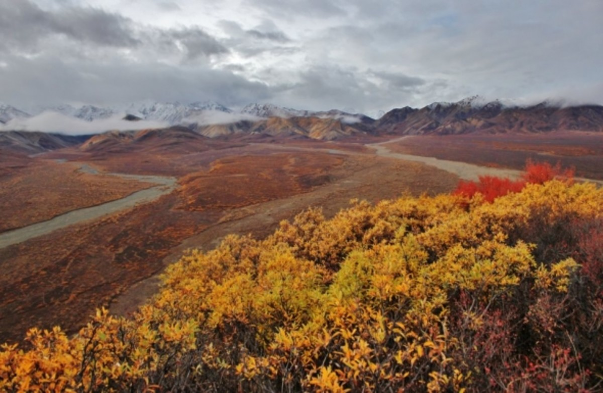 Fall Colors in Denali National Par by David Broome