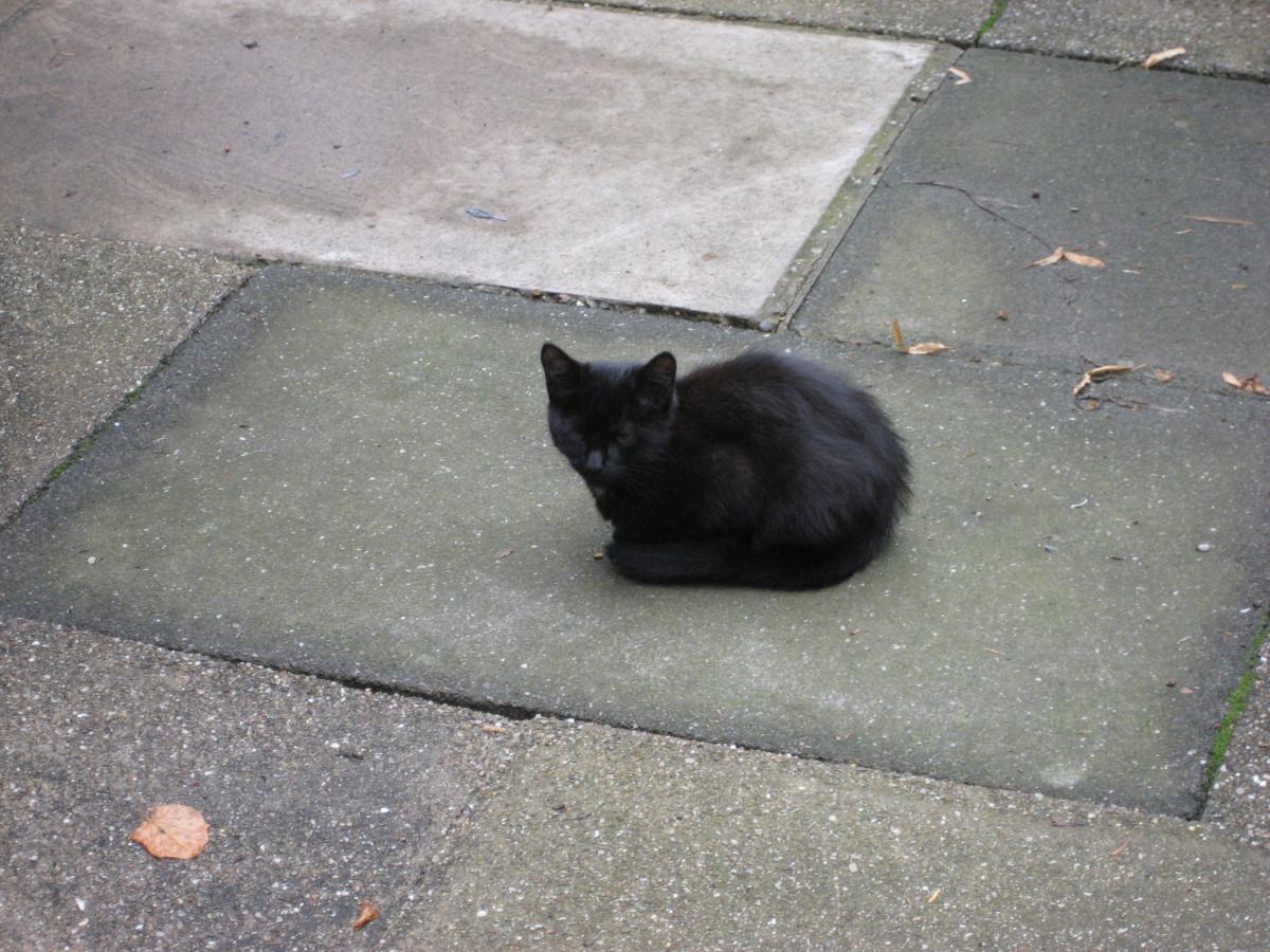 A black kitten, 'Kitty', enjoys the warm patio.