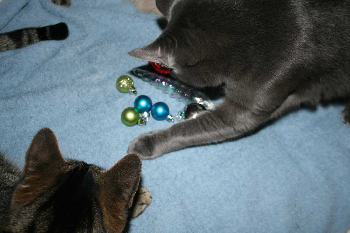 The ornaments getting knocked off the tree.