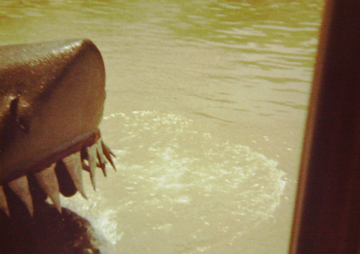 "I tried to take a picture of the original ""carrot tooth"" shark on the Universal Tour back in 1977. I only got the tip of his nose, and a few of those goofy floppy teeth."