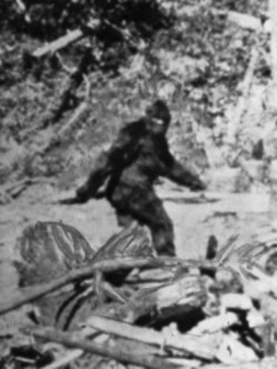 Photo of Bigfoot