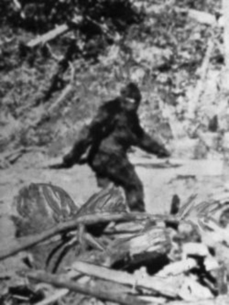 Photo of Bigfoot