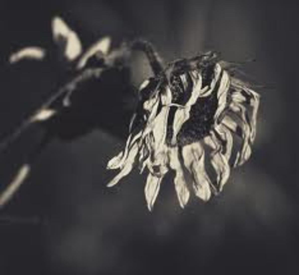 Sunflowers in the Dark: A Poem Regarding Human Trafficking, Including 7 Horrific Facts, and Music4Freedom